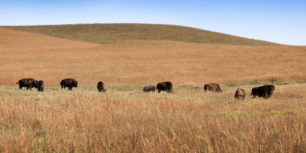an essay on the preservation of the tallgrass prairie ecosystem To triepels slagwerk - geleen limburg,uw an analysis of descartes sixth meditation drumspecialist, drumstel kopen, boomwhacker lessen pozzo/lucky we provide excellent essay writing service.