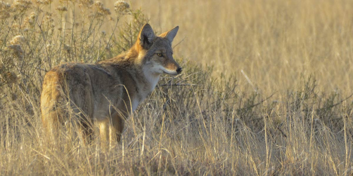 Wildlife watching chase county kansas find yourself here for Kansas fish and wildlife